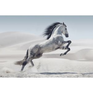 Poster Horse - Andaluz, (91,5 x 61 cm)