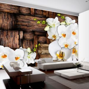 Foto tapeta - Blooming orchids